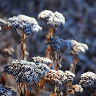 Sue_Monday-frost-garden.jpg