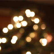 Sue_Saturday-tree-lights.jpg
