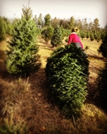 Sue_Saturday-tree-farm3.jpg
