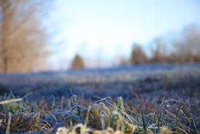Sue_Monday-frost.jpg