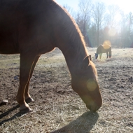 Sue_Sunday-horses.jpg